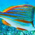Cayo Espanto Scuba Diving