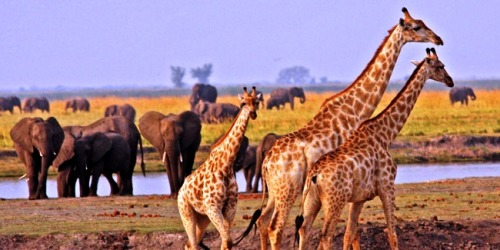 JOTS Luxury Travel October Newsletter: Botswana, a family vacation to remember for a life time