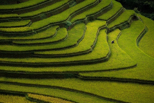 Rice fields on terraced in sunset at Mu Cang Chai, Yen Bai, Viet