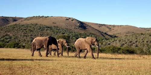 Highlights of Southern Africa: A journey beyond imagination